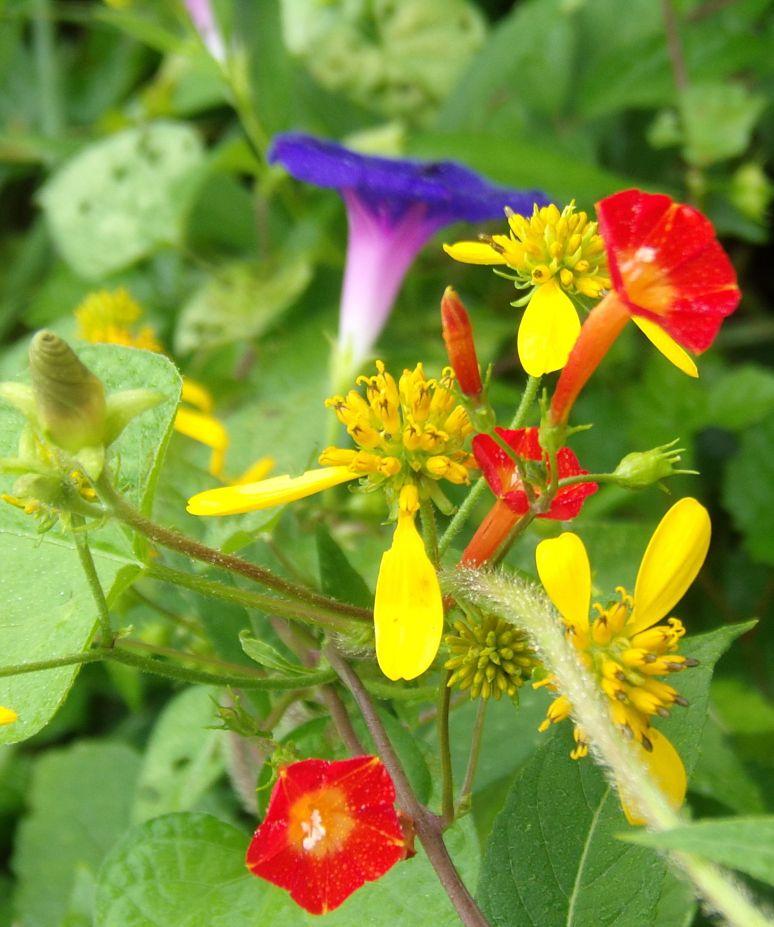Wildflower Variety