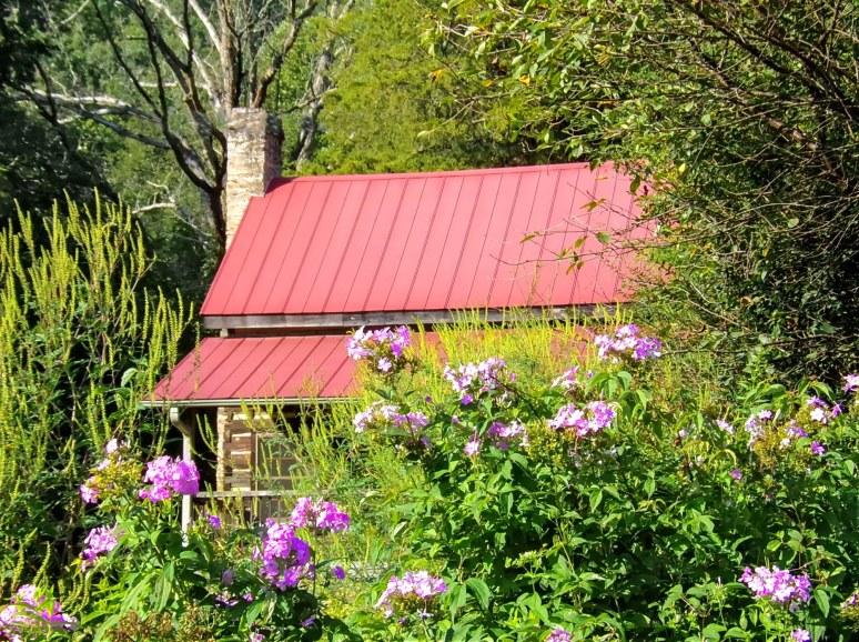 Ham Creek log Wildflowers