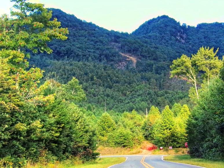 Pinnacle Peak Forest