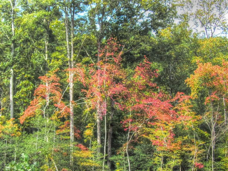Maples of Cove Road