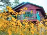 Narrow Leaf Sunflower Deck
