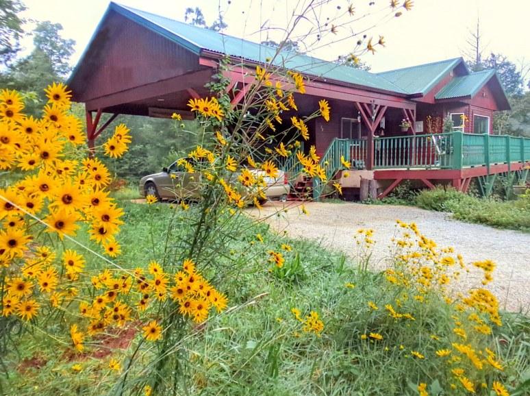 Narrow Leaf Sunflower House