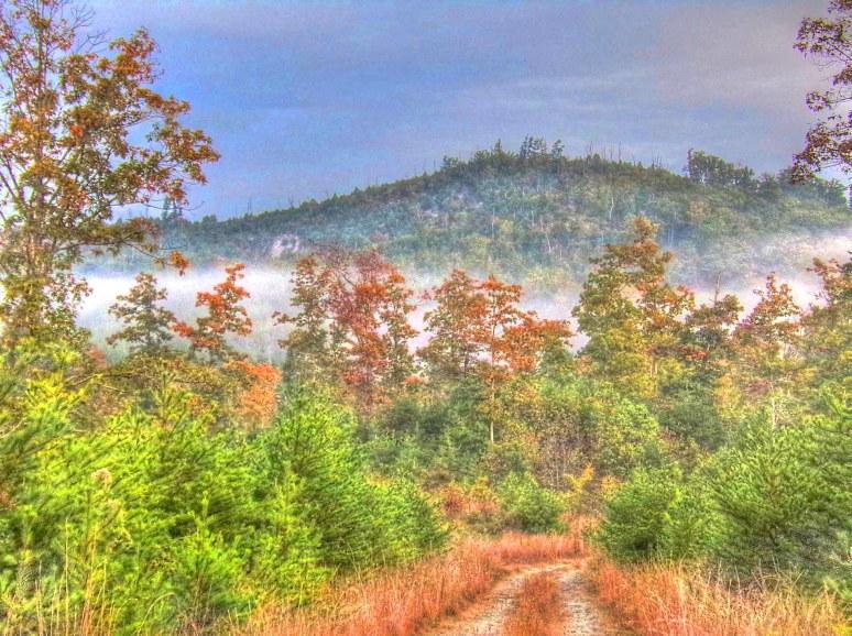 Brushy Top Fog in fall