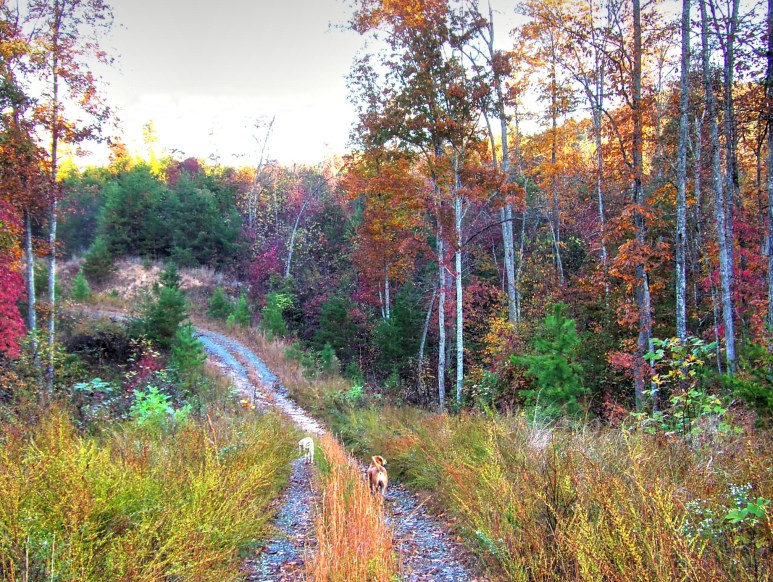Otter Creek Valley Fall