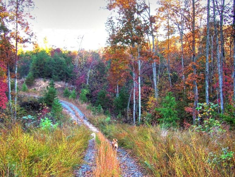 Otter Creek Valley Fall