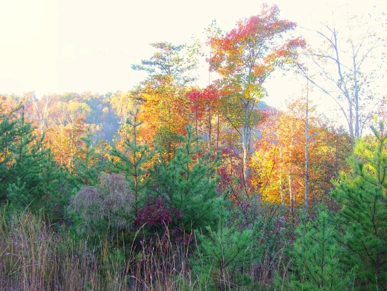 Dick's Mountain in Autumn