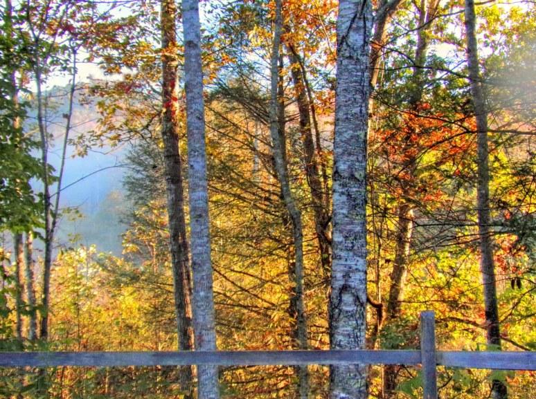Otter Creek Valley autumn trees