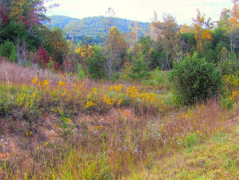Young's Mountain Lake Lure autumn