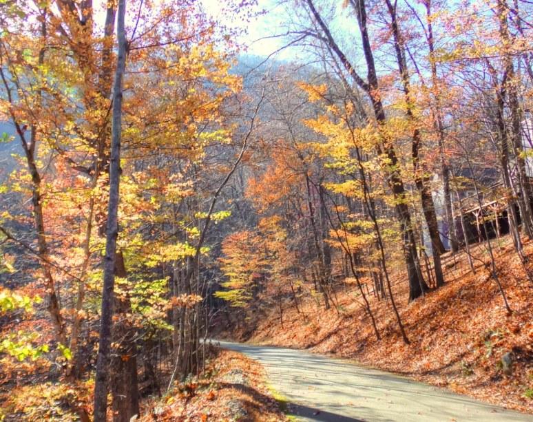 Bald Mountain Lane in Fall