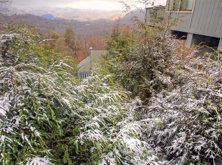 Sugar Mountain Evergreens
