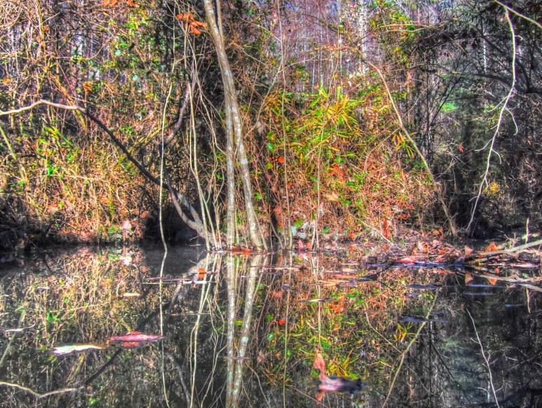 Otter Creek Branch Floods