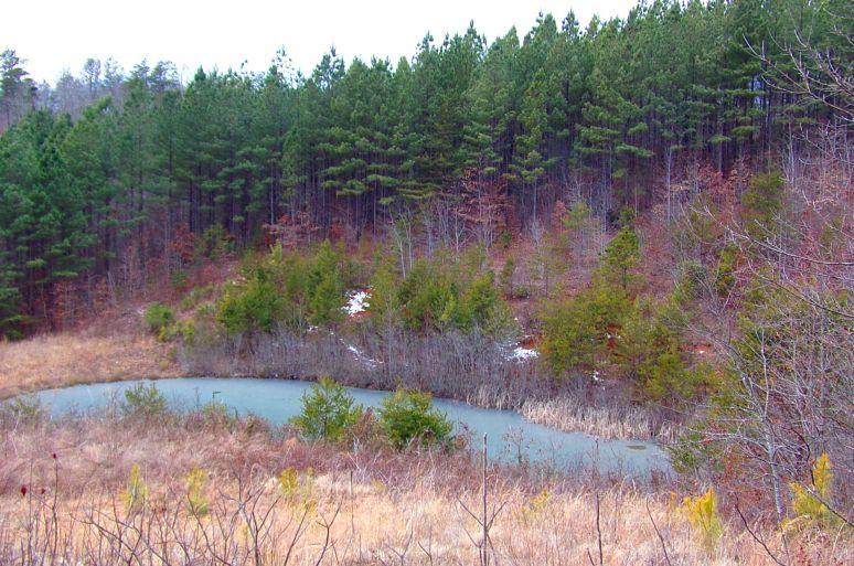 High Lodges Pond Frozen Over