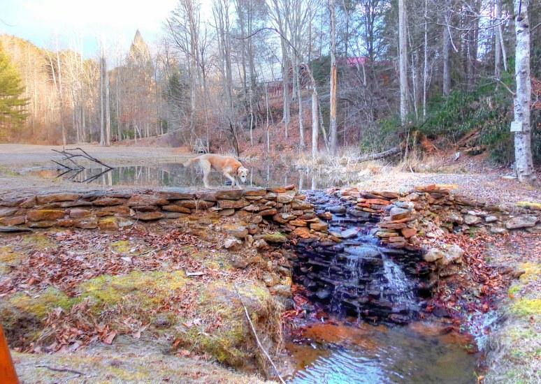 Golden Lab Hunter at Otter Creek