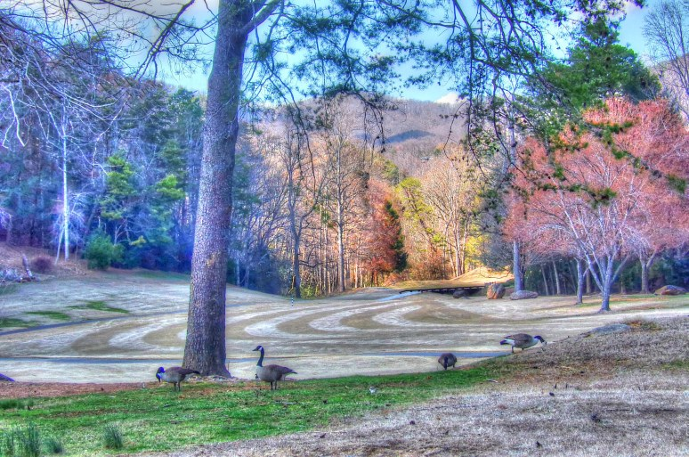 Canada Geese at Lake Lure