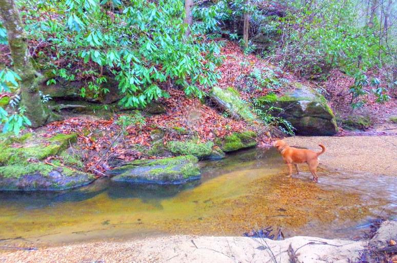 Otter Creek Gorge 6