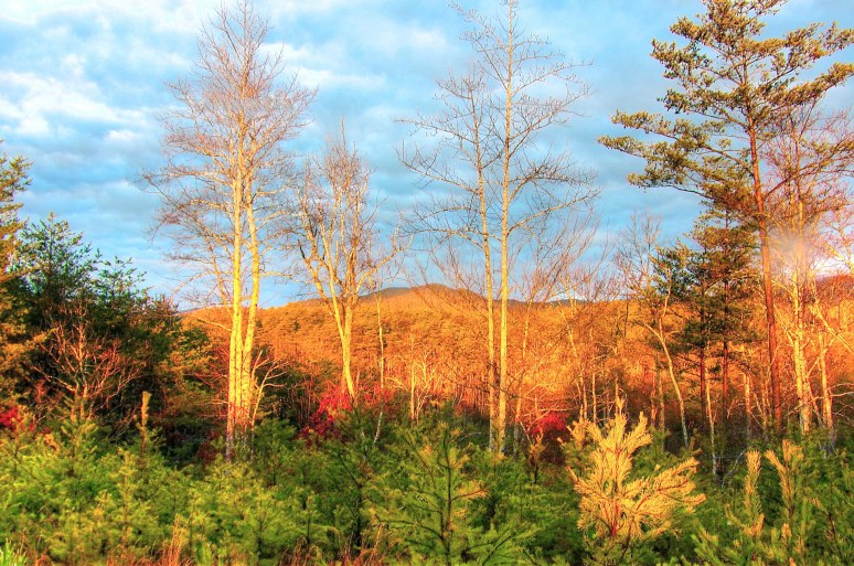 Horsetop Mountain Winter View