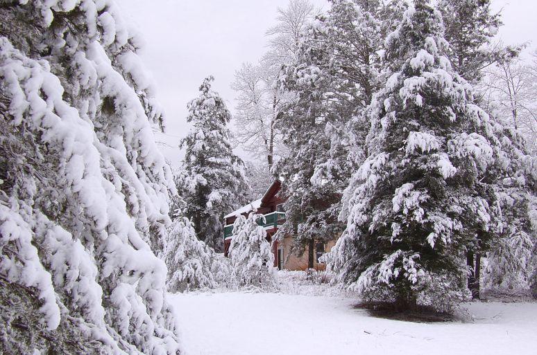 Hemlock House Snow Trees
