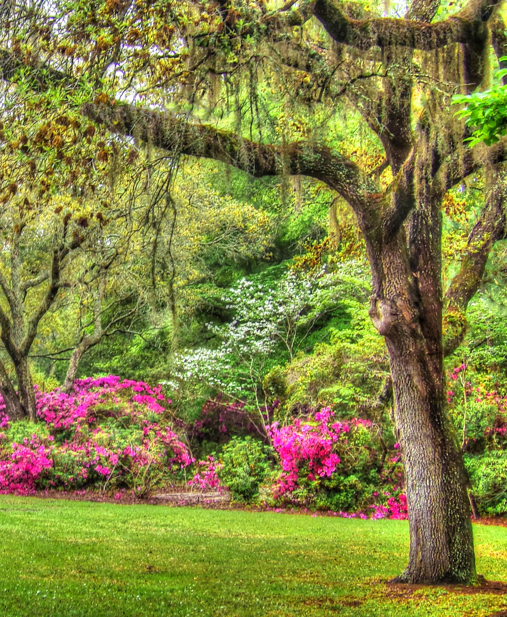 Brookgreen Gardens At Myrtle Beach Living In The Blue Ridge Mountains Of North Carolina A Blog