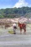 Cumberland Island BeachHorses