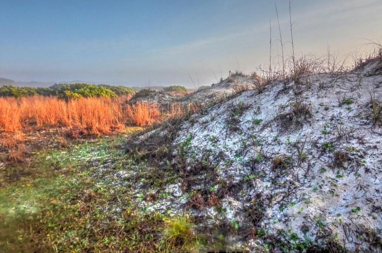 Cumberland Island Dune Grass