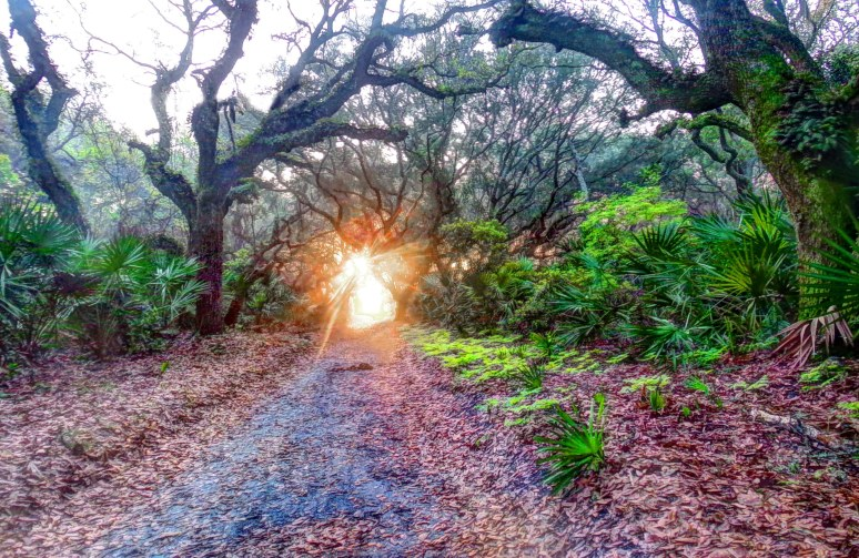 Cumberland Island Live Oak Sunrise