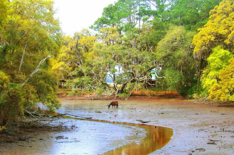 Cumberland Marsh Horse