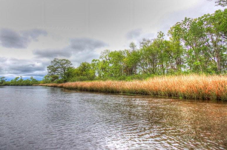 Brookgreen Tidal Creek