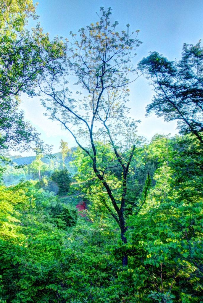 Otter Creek Forest Vista