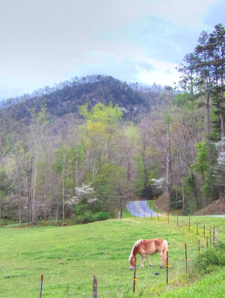 Youngs Mountain Pony