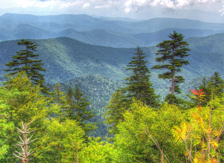 Clingman's Dome East View
