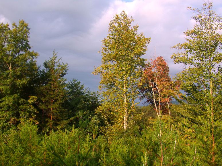 Color is creeping into the woods all over the valley.
