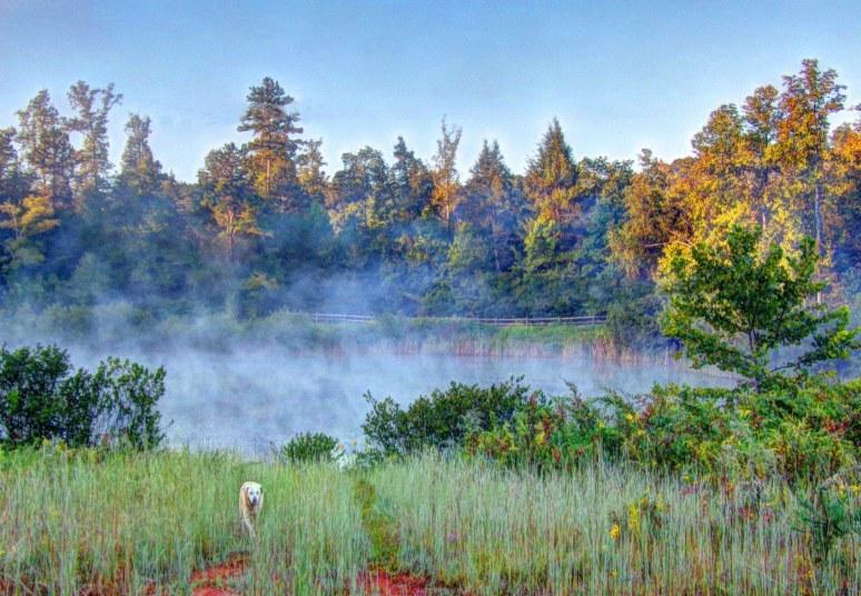 Otter Pond Fog