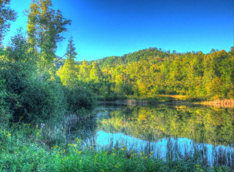 Otter Pond Color