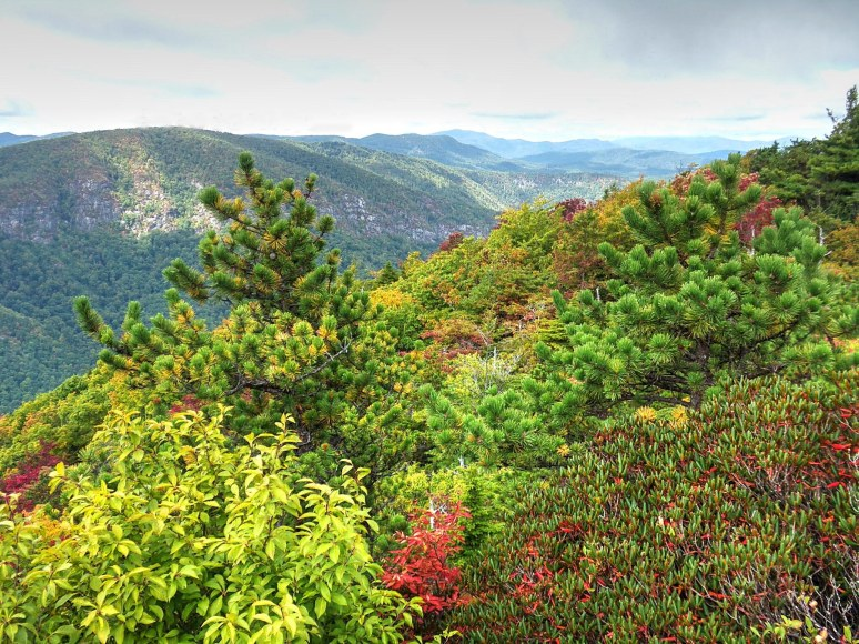 Linville Gorge northern view