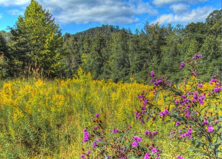 Otter Creek Meadow