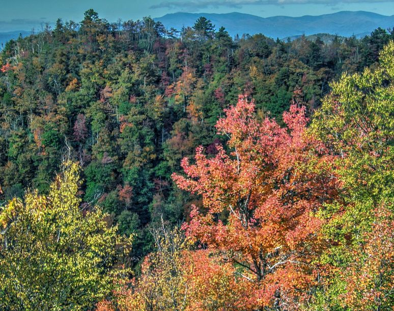 Blue Ridge Parkway in Green and Yellow