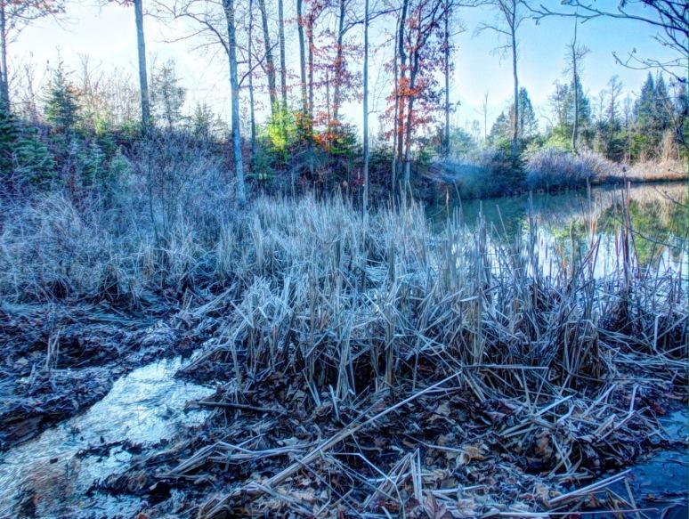 Pond Branch