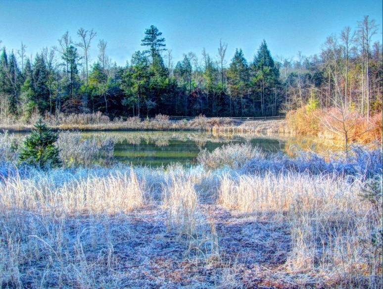 Pond Frost