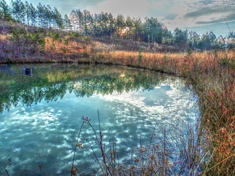 Pond North