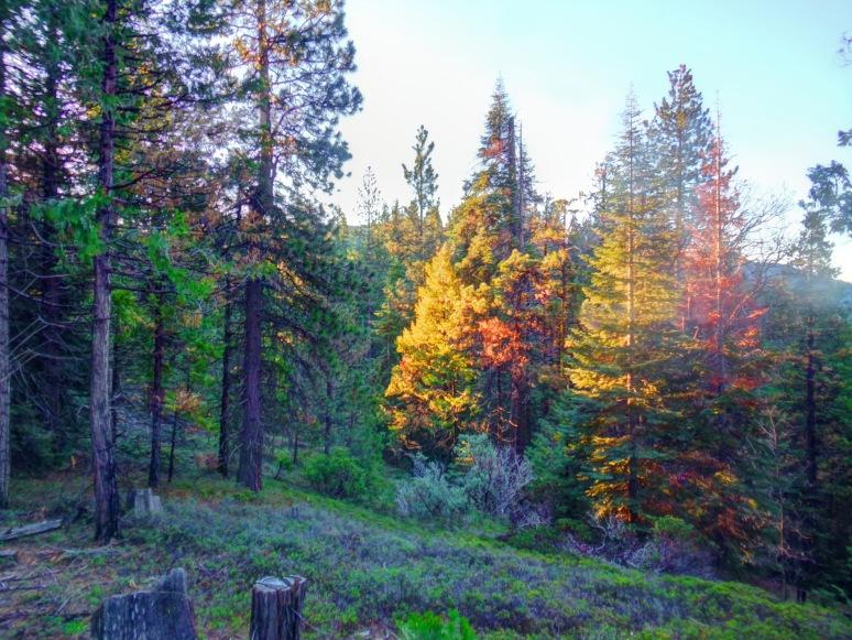 Yosemite Woods