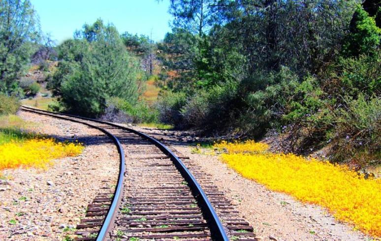 Wildflower Track