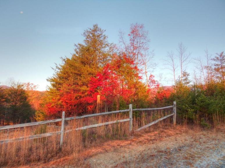 oak-fence