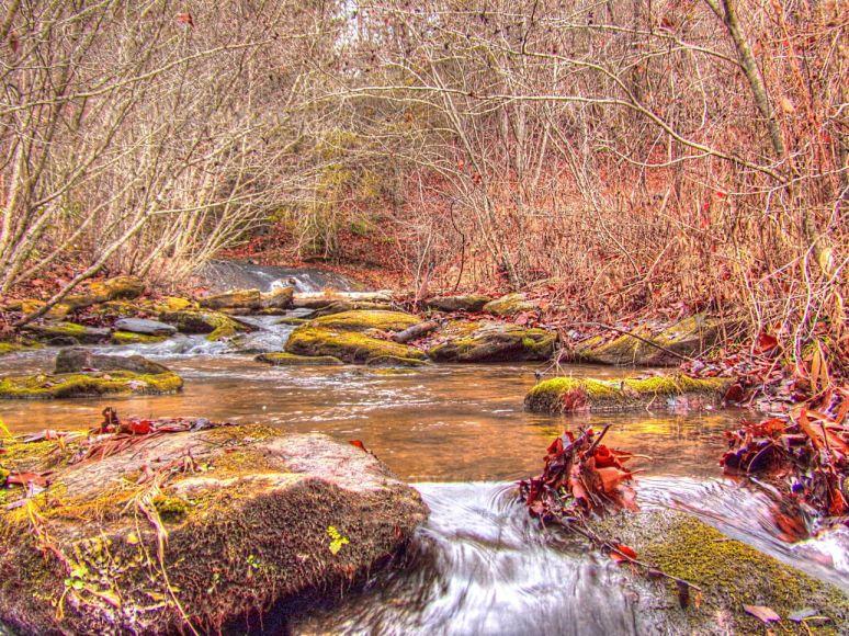 creek-otter