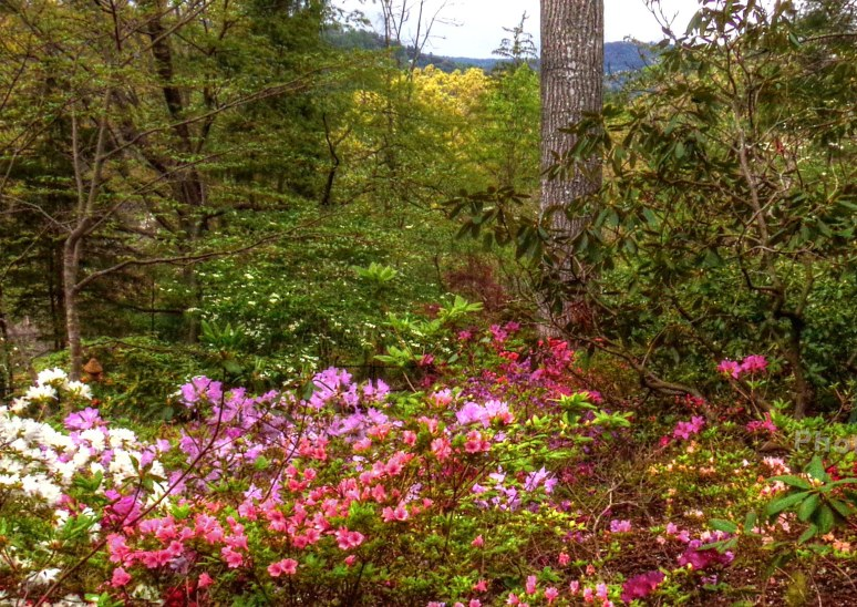 sunset mountain asheville azaleas vista