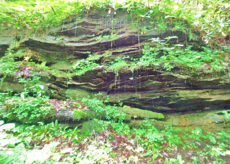 Pearson's Falls Gorge Wall