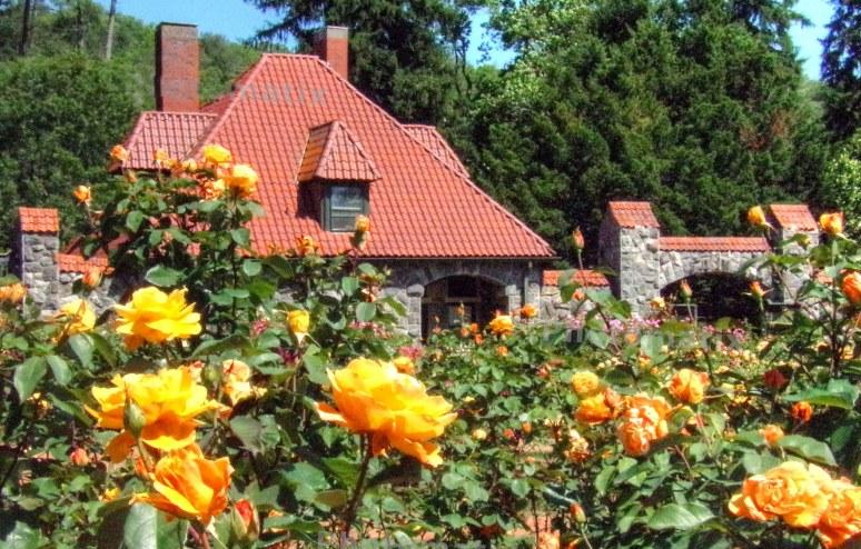 Biltmore Gardens Yellow roses