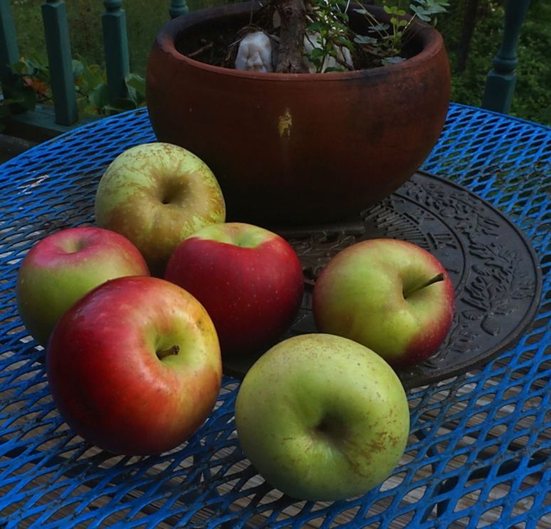 Otter Creek Valley apple table
