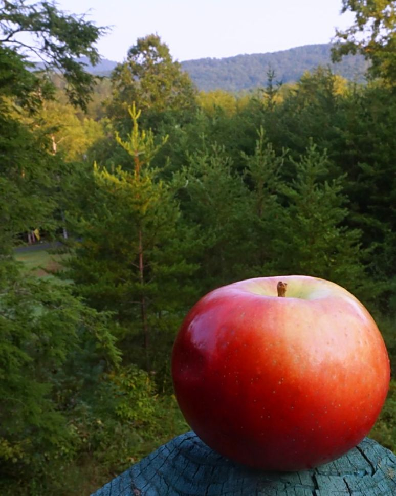 Apple at Hemlock House North Carolina