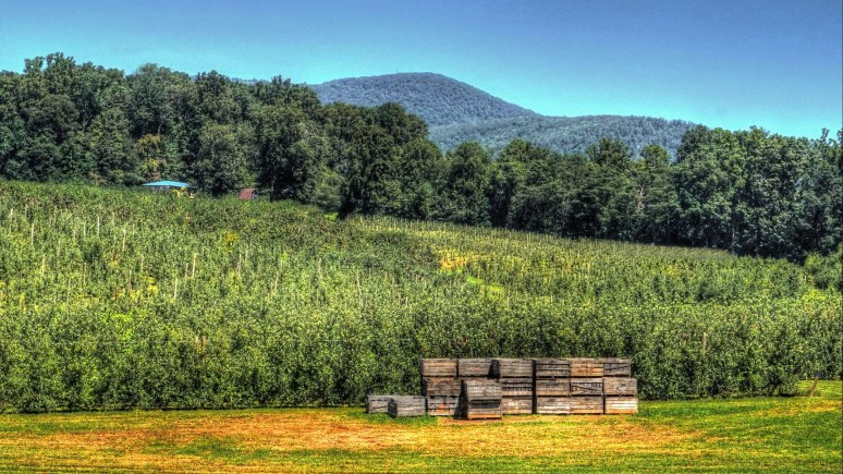 Apple Valley North Carolinaorchard