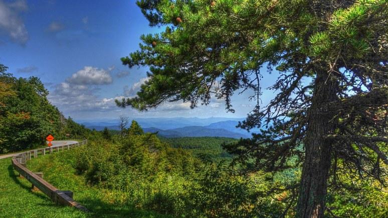 Blue Ridge Parkway Pine